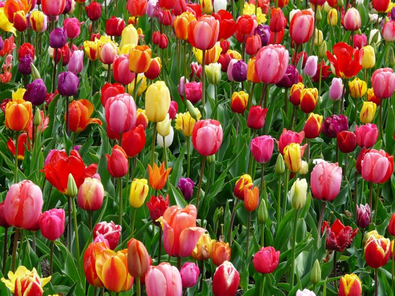Equinoccio de Primavera